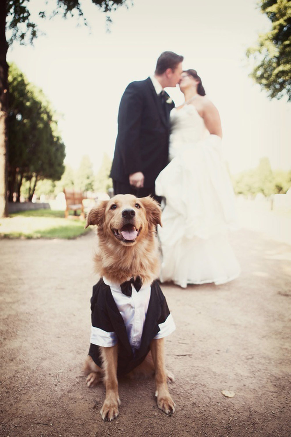 Dog Wedding Outfits Uk